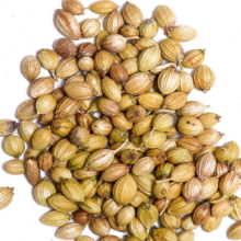 বিলাতি ধনিয়া বীজ, coriander seeds, False Coriender seeds, Eryngium seeds, Eryngo seeds, বাংলা ধনিয়া বীজ, bilati dhonia bij,bangla dhonia bij