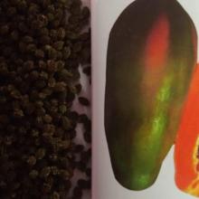 bij, red lady papaya bij, red lady hybrid pape bij, বীজ, রেড লেডি পেপে বীজ, রেড লেডি হাইব্রীড পেপে বীজ , Seeds,red lady papaya seeds, red lady hybrid papaya seeds