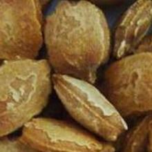 বারি করলা-১ বীজ, Hybrid Bitter Gourd, Bari karla-1 seed, বীজ ,হাইব্রীড করলা বীজ,bij,hybrid karla-1 bij,karla bij,করলা বীজ,