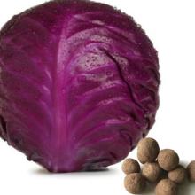 Red Cabbage Seeds, লাল বাঁধা কপি বীজ,রেড ক্যাবেজ সিড,বীজ,seed,
